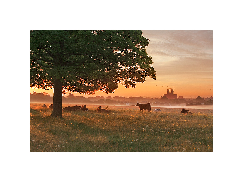 Image of the Month, April 2012, Beverley Westwood, Beverley, East Yorkshire