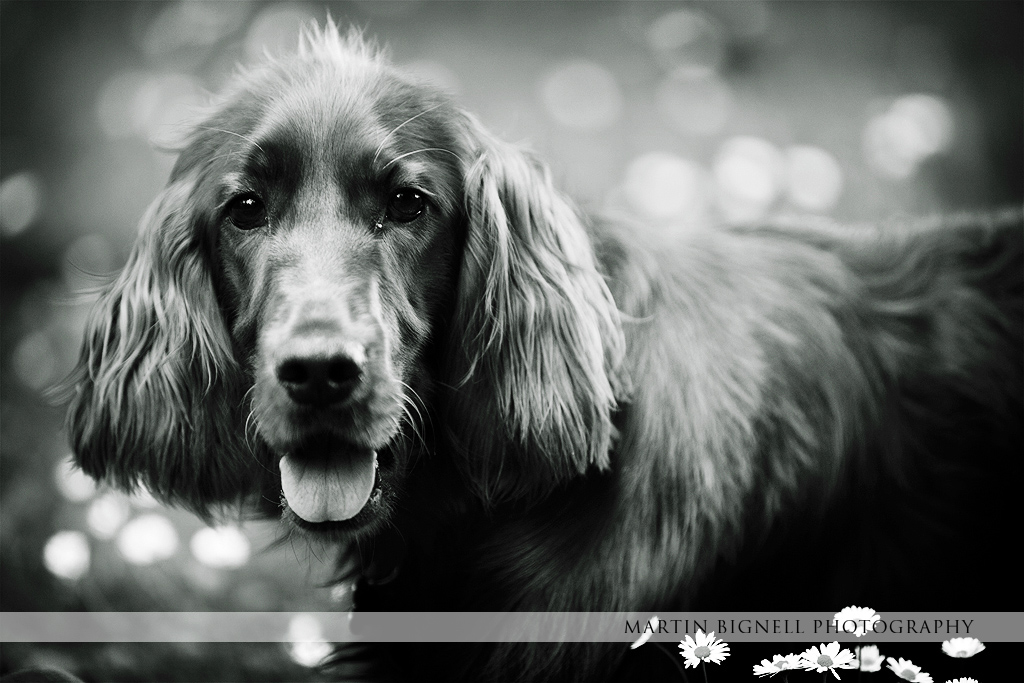 Pet portrait photography by Martin Bignell ABIPP